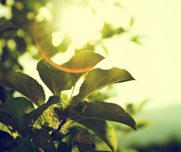 Energy saving tips, Alternative Energy Today